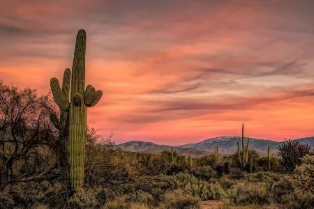 Sunset Sabino Desert