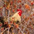 © Beth OMeara PhotoID# 15709440: Roosting