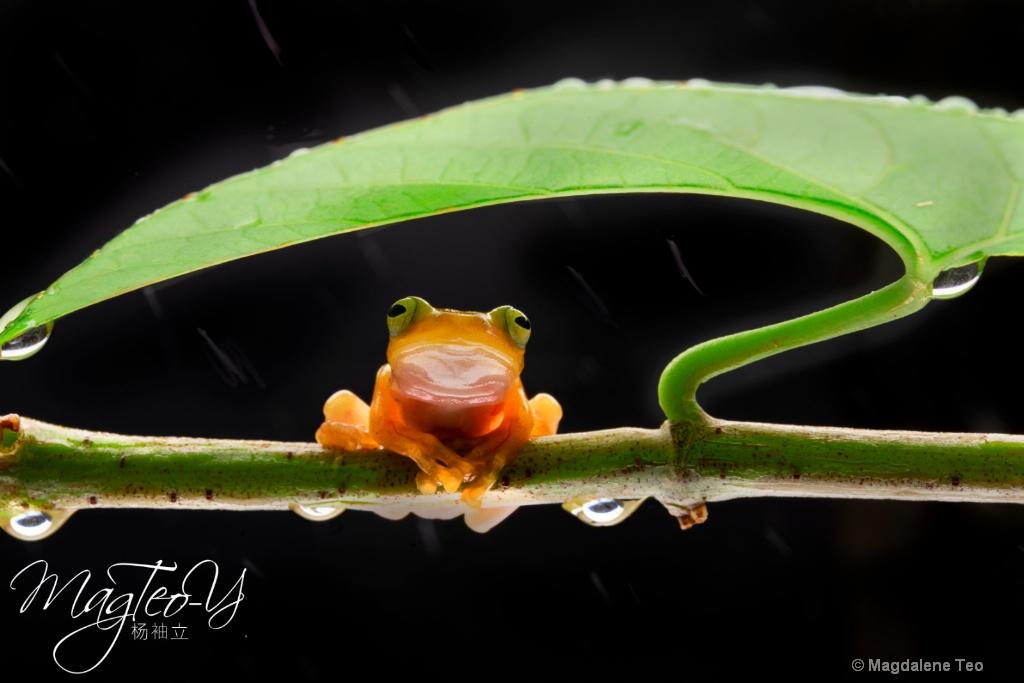 Frog taking Shelter - ID: 15710703 © Magdalene Teo