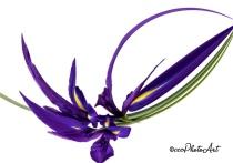 Fantasia Iris