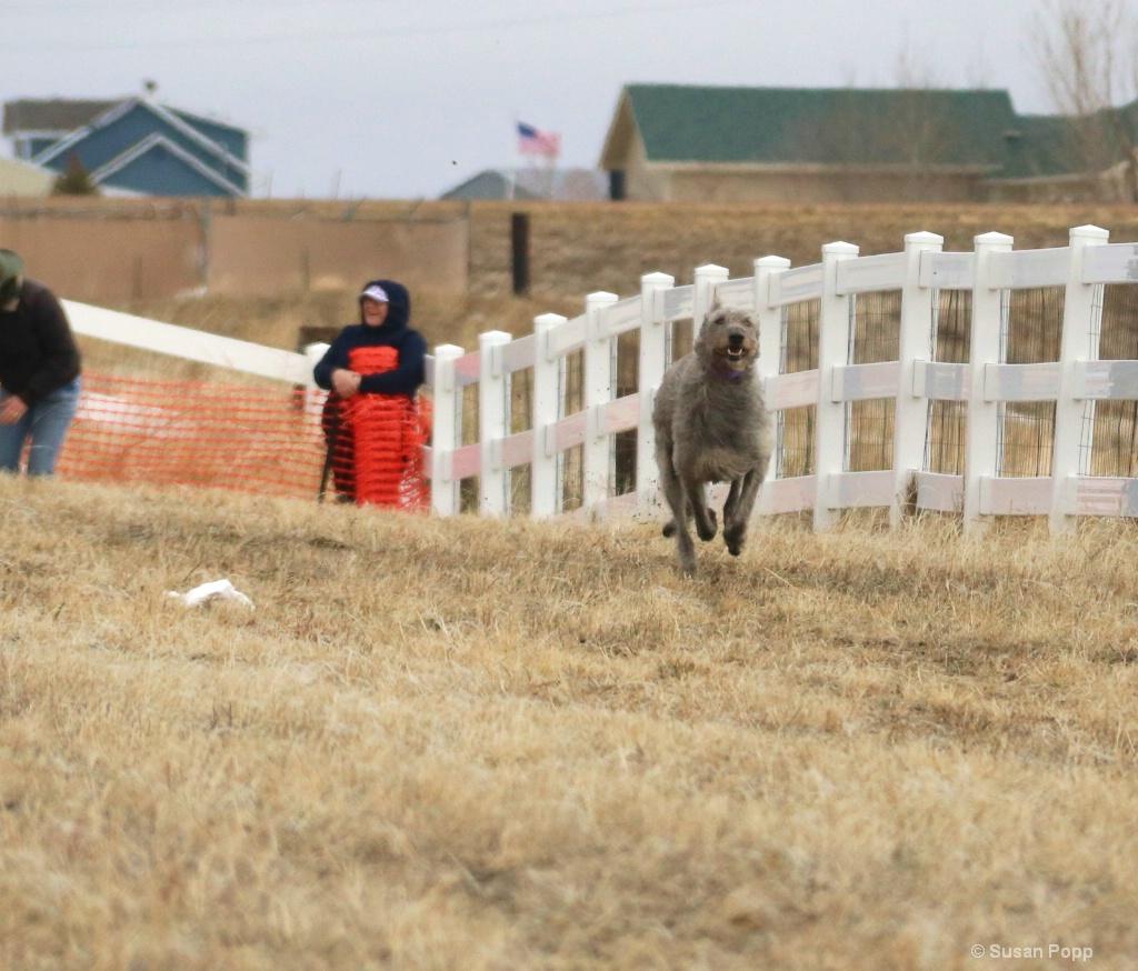sat dog 1.0 - ID: 15711937 © Susan Popp