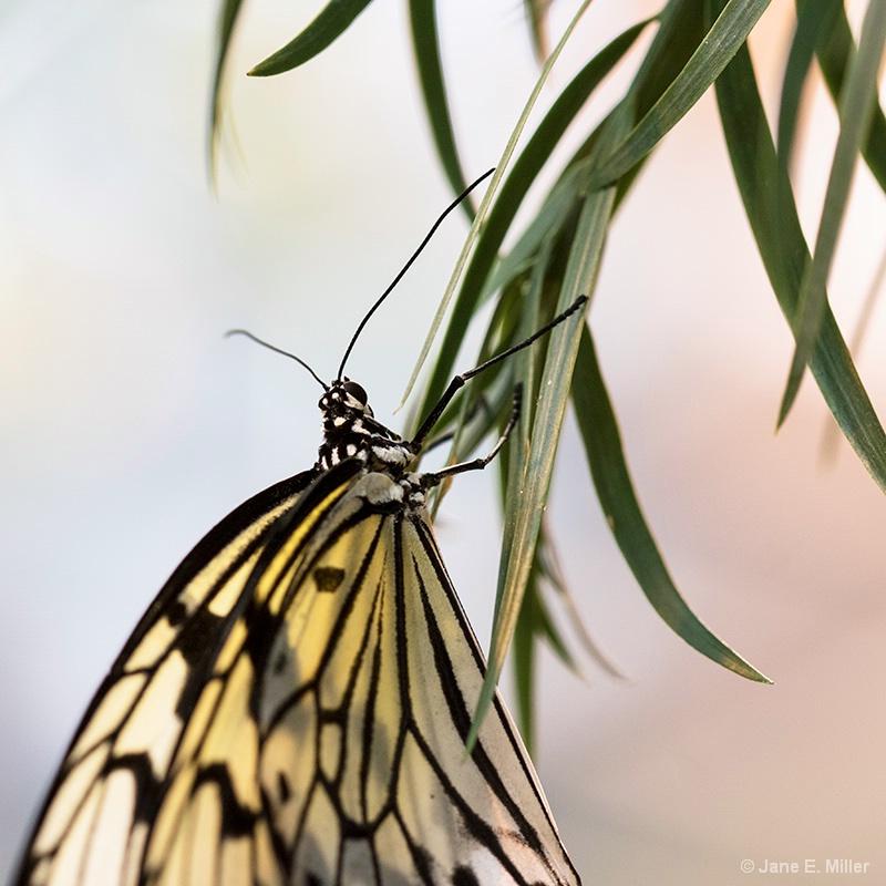 Delicate Beauty! - ID: 15712010 © Jane E. Miller
