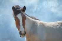 Artistic Wild Horse