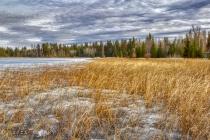 Thawing Lake Grasses