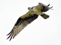 The Fisher Bird