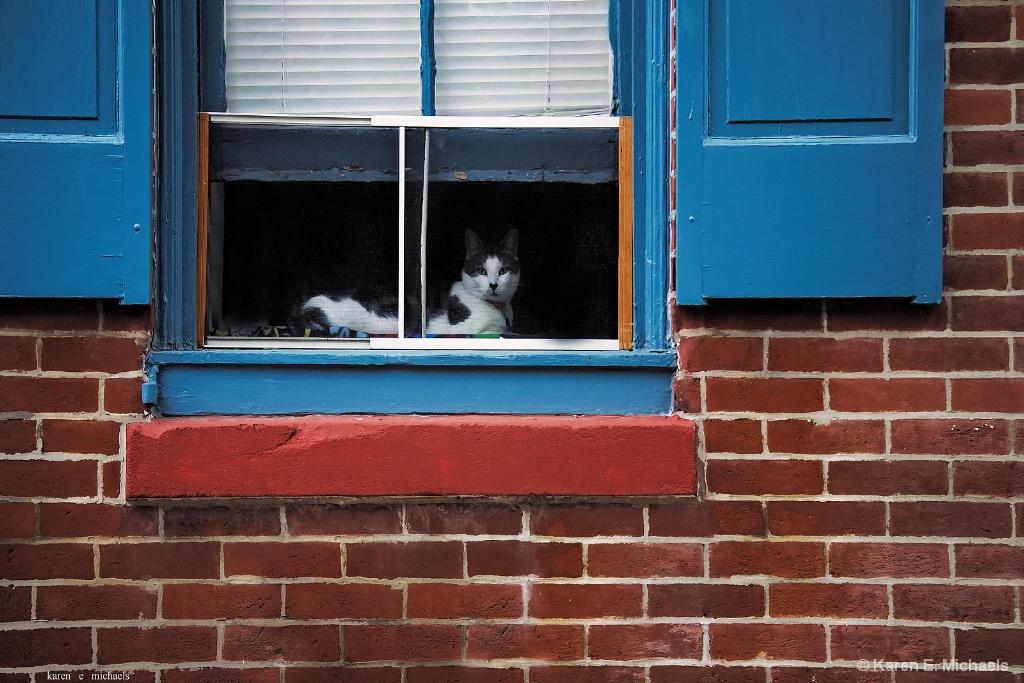 city cat - ID: 15713883 © Karen E. Michaels