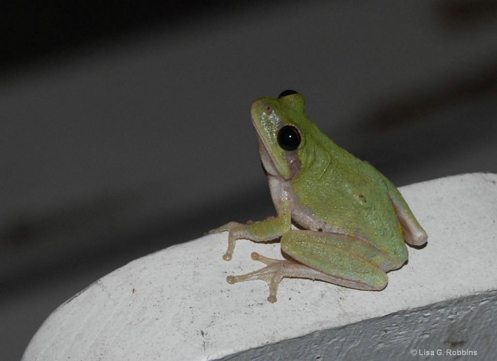 My Nightly Visitor