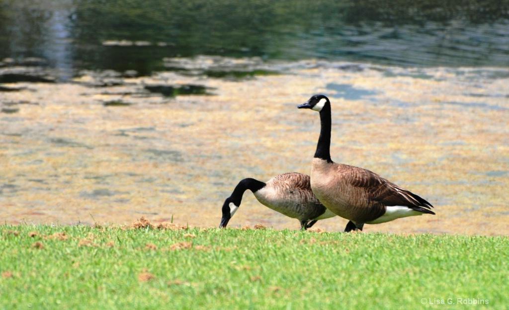 Hiller Park Biloxi MS 2 - ID: 15714097 © Lisa Robbins