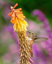 Humming Birds Lunch