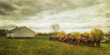 Horses and Schoolhouse