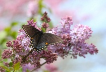 Spring Wings and Blooms