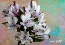 Lavender & White Delight