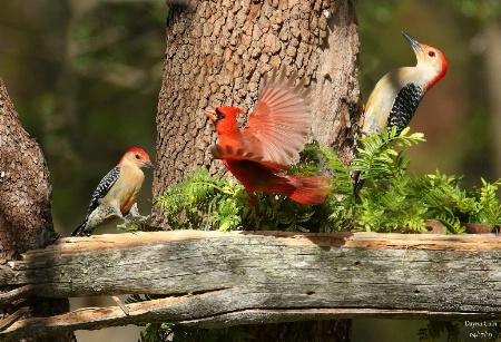 Bird Feeder Frenzy