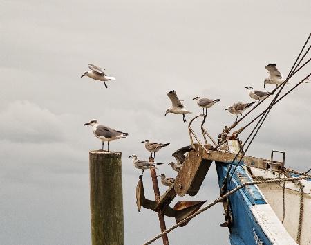 Establishing the pecking order