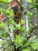 Squirrel peeking