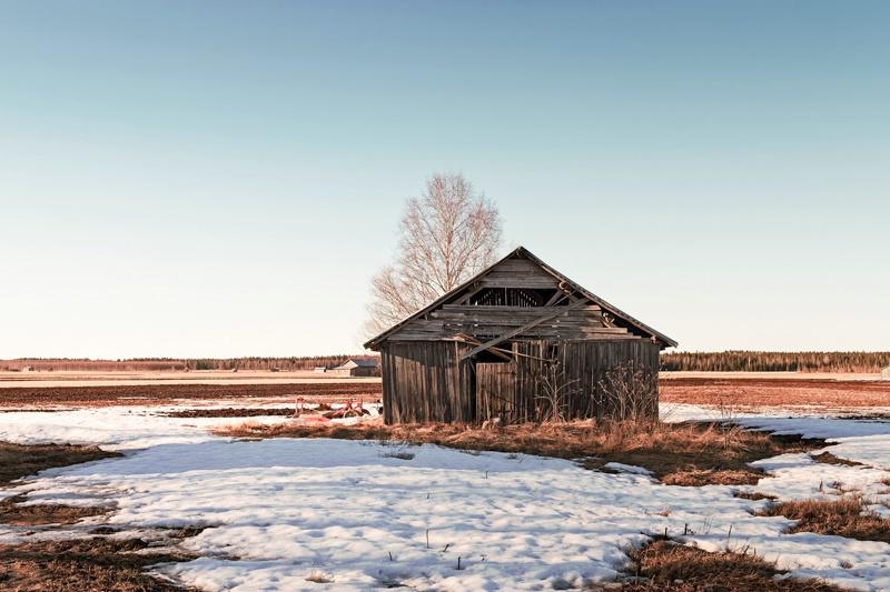 Barn House In The Springtime Sun