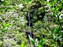 Waterfall from Distance through Rain Forest