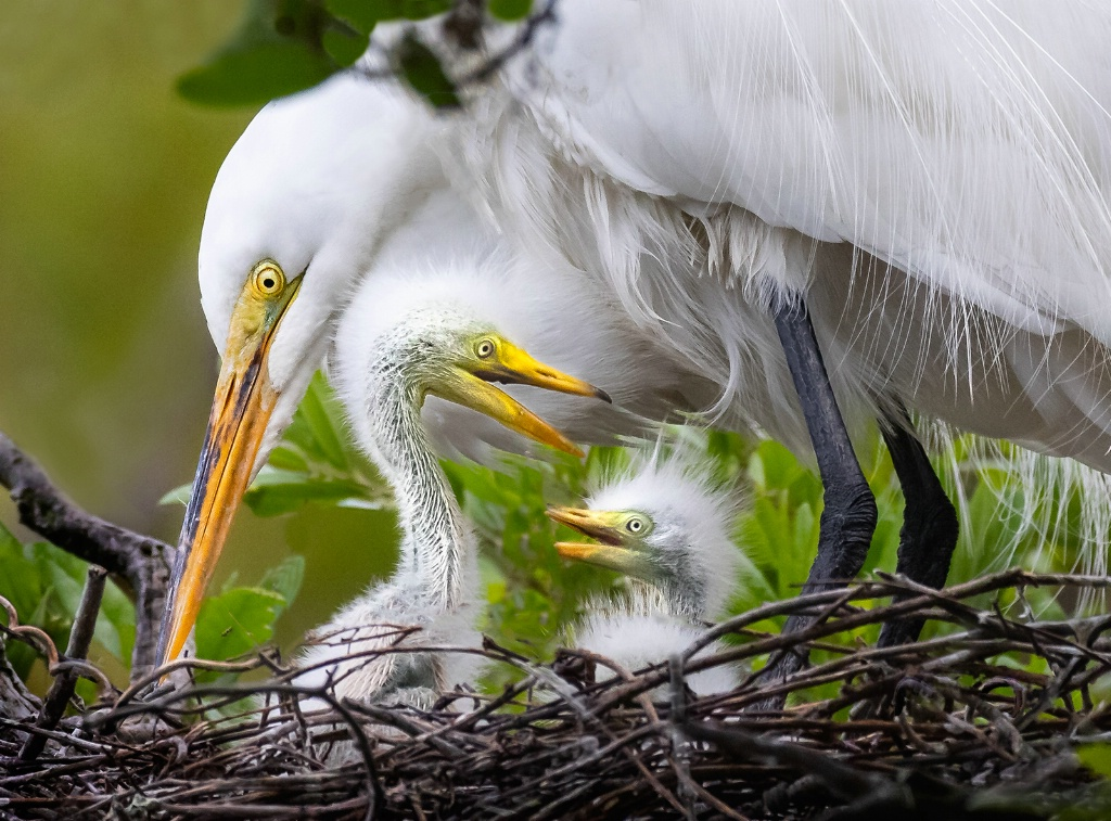 Egret Family Portrait