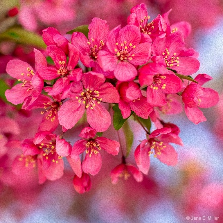 Pink Explosion!