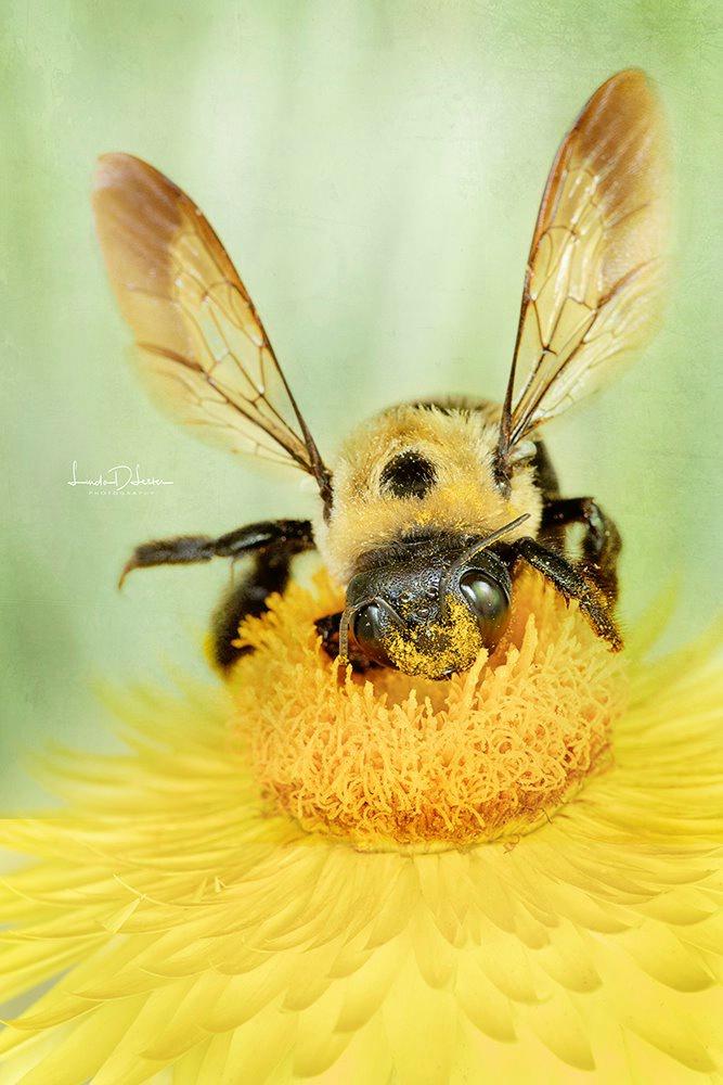 Bee in Heaven