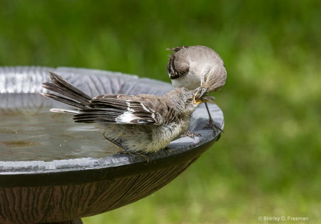 Feeding Time - ID: 15722207 © Shirley D. Freeman