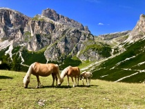 Wild Ponies of Northern Italy