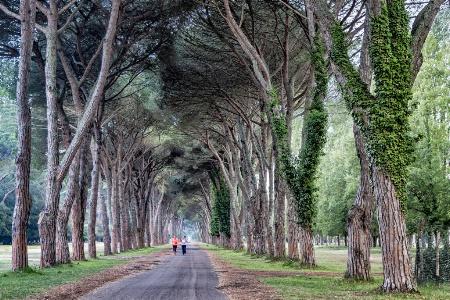 Tree Tunnel Run  3106