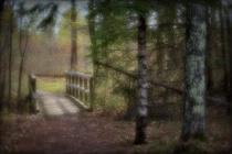 A Little Bridge  to Nature