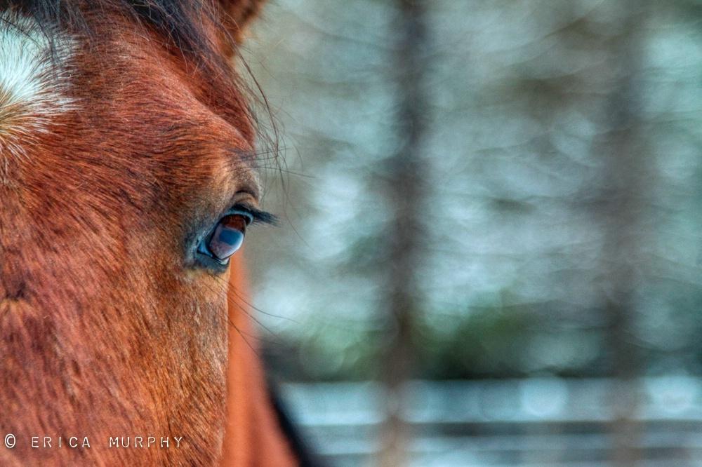 Sam's Eye - ID: 15723123 © Erica Murphy