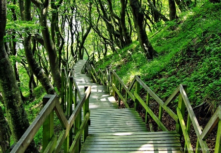 Stairs Through the Woods