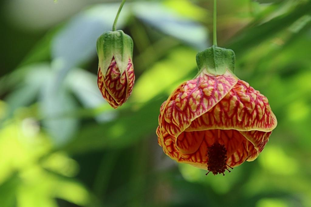 Floral Lantern